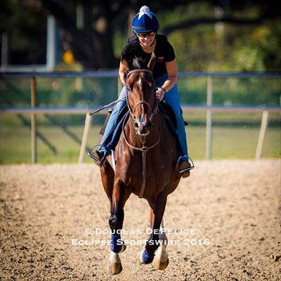 Galloping out after a breeze at Tampa Bay Downs