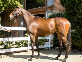 Gai's Racehorse Training Blog