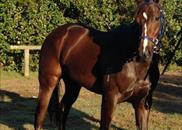 Almalad in Brisbane where he won the Group 1 JJ Atkins