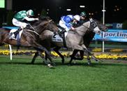 Divine Calling wins the Group 2 Bill Stutt Stakes at Moonee Valley on 27th September