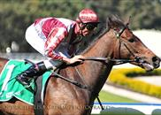 Julienas win the Group 3 Colin Stephen Handicap at Rosehill on 28th September