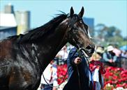 The majestic Fiorente