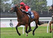 New Day Rising winning at Warwick Farm 5th March 2011Thank you Lisa Grimm for the great photos!