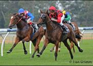 Shared Reflections winning the Group 3 Sweet Embrace Stakes. Thank you Lisa Grimm for the great photos!