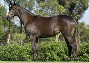 Charge Forward x Morton Yearling Filly. Purchased from Magic Millions for $240,000. 72.5% SOLD.