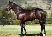 Lot 123 - More Than Ready x Yarralumla colt purchased ffrom Easter for $420,000. FULLY SOLD.